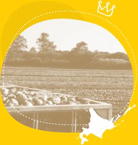 日本一の玉ねぎ産地
